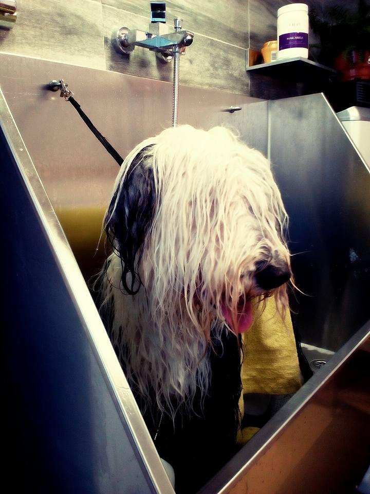 salidas profesionales peluquero canino