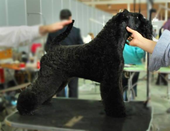 cuanto gana un peluquero canino