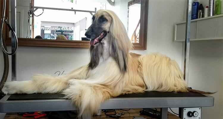 que hay que estudiar para ser peluquero canino