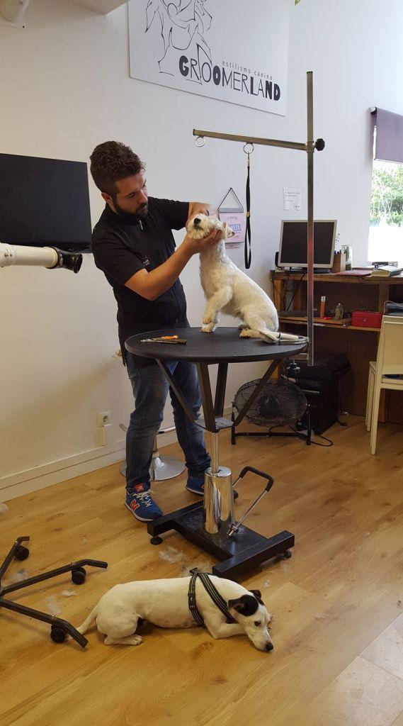 estudiar peluqueria canina