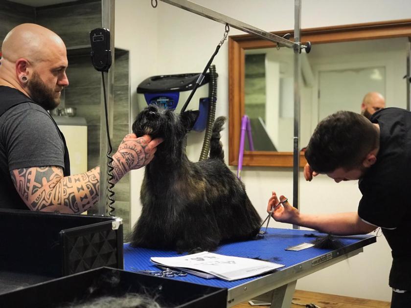 scottish terrier peluqueria