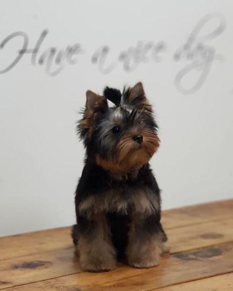 peluqueria canina para cachorro en madrid